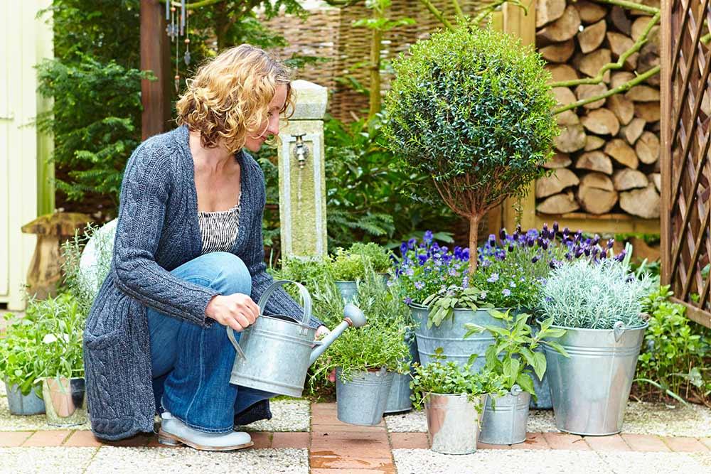 Mediterrane Pflanzen Wiesner Garten Und Reinigungstechnik