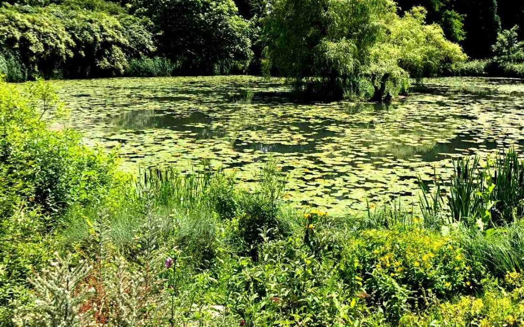 Im Herbst Den Gartenteich Reinigen Wiesner Garten Und